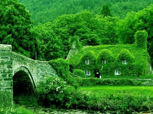 casa-verde-sfondo