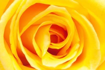 images_Foto_Articoli_medicina-alternativa_naturopatia_cromoterapia_colore-giallo-cervello